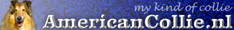 BannerAmericanCollie001