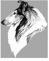 collie head